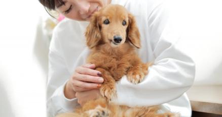 飼い主に抱かれるペット